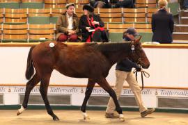Lot  632 T D F0410 Tattersalls