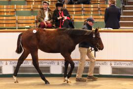 Lot  632 T D F0479 Tattersalls