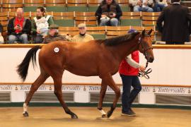 Lot  639 T B2 1073 Tattersalls