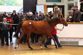 Lot  639 T B2 1103 Tattersalls