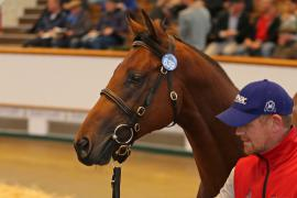 Lot  639 T B2 1343 Tattersalls
