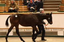 Lot  680 T D F0702 Tattersalls