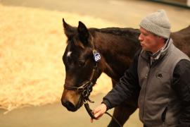 Lot  680 T D F0714 Tattersalls