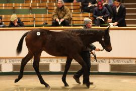 Lot  680 T D F0732 Tattersalls