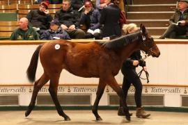 Lot  691 T D F0767 Tattersalls