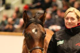 Lot  691 T D F0824 Tattersalls