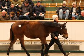Lot  693 T D F0846 Tattersalls