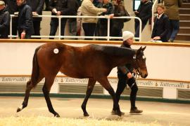 Lot  693 T D F0860 Tattersalls