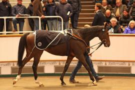 Lot  694 H I T2750 Tattersalls