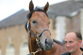 Lot  6 T G B0052 Tattersalls