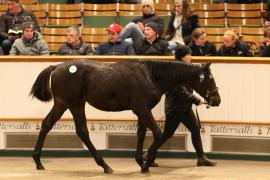 Lot  700 T D F0941 Tattersalls