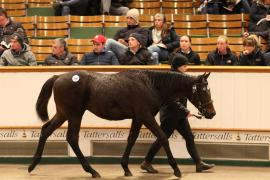 Lot  700 T D F0962 Tattersalls