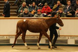Lot  710 T D F1209 Tattersalls