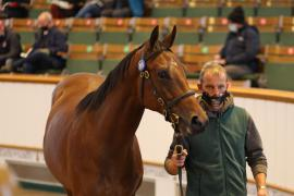 Lot  819 T B K2 2438 Tattersalls