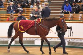 Lot  94 H I T131 Tattersalls