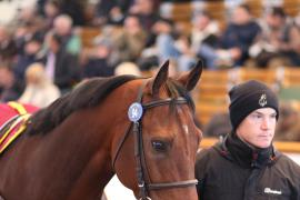 Lot  94 H I T190 Tattersalls