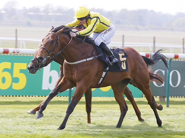 Tattersalls Guineas Breeze Up Purchase FAR ABOVE winning the G3 Palace House Stakes