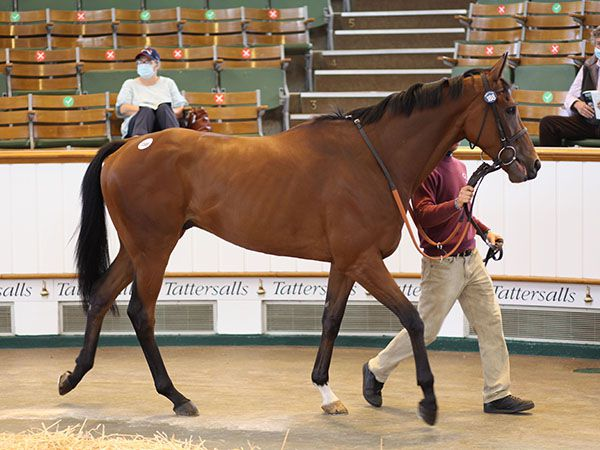 Lot 188: Cloud Drift (GB)