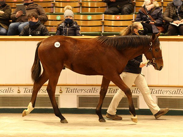 Lot 718: Sea The Stars (IRE) x La Mortola (GB)