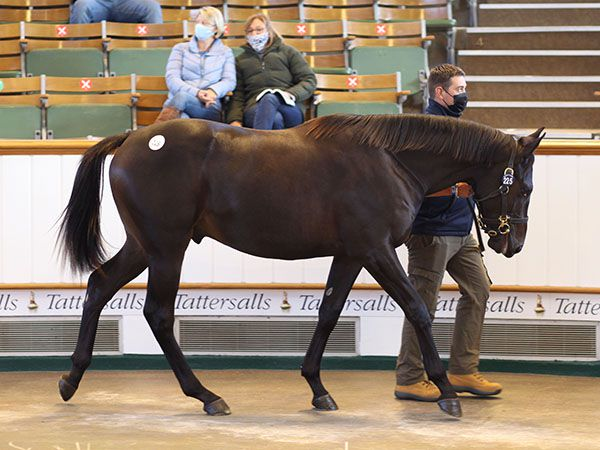 Lot 225: Dubawi (IRE) x Intricately (IRE)