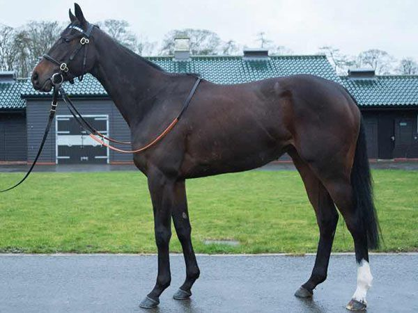 Lot 194: Beautiful Illusion (IRE)