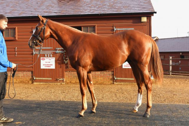 Manaccan pictured at Book 1 of the Tattersalls October Yearling Sale