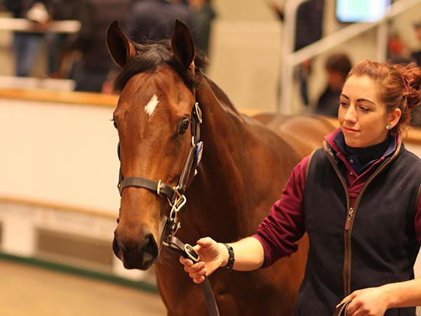 Lot 1567: Territories (IRE) x Love Your Looks (GB)