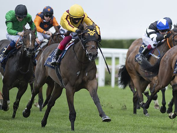 Janina, the dam of Group 1 Prix Morny winner Campanelle (pictured), was purchased at the July Sale for 39,000 guineas