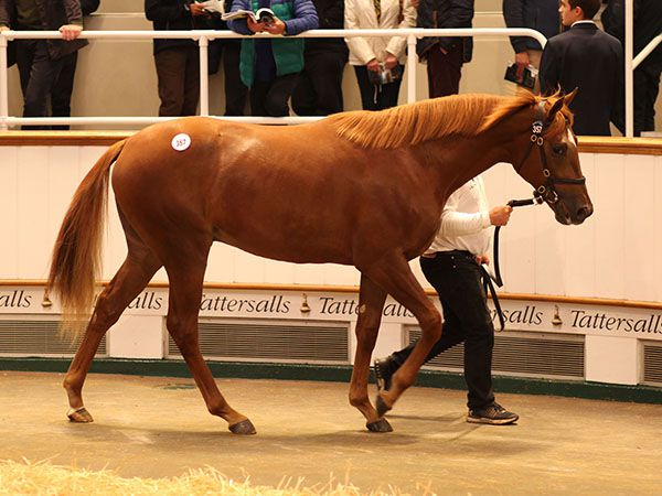 Act Of Wisdom sells at the October Yearling Sale