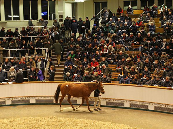 The Tattersalls sales ring during the 2019 December Sales
