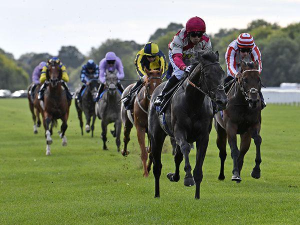 Endowed Winning at Windsor