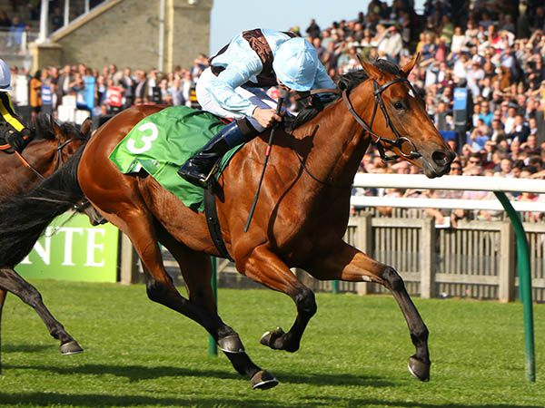 Queenofthefairies, the dam of Group 1 winner Fairyland (pictured), was purchased at the Tattersalls July Sale for just 32,000 Guineas