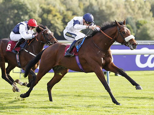 Franz claimed the 270th £20,000 Book 1 Bonus with an impressive winning debut at Haydock