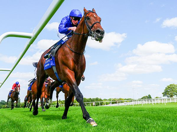 European Champion GHAIYYATH has a half-brother by KINGMAN in this year's catalogue