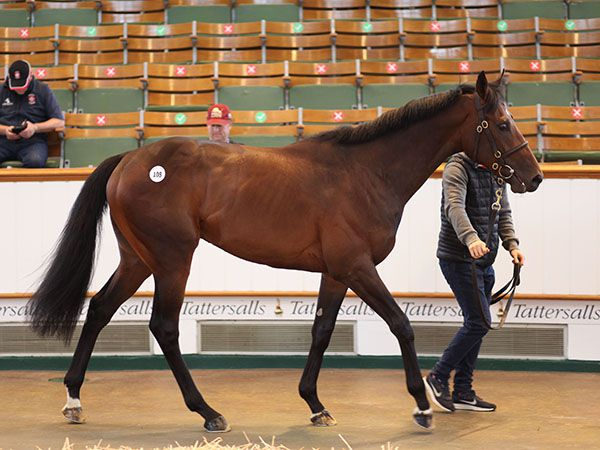 Lot 108: Excelebration (IRE) / Open Book (GB)