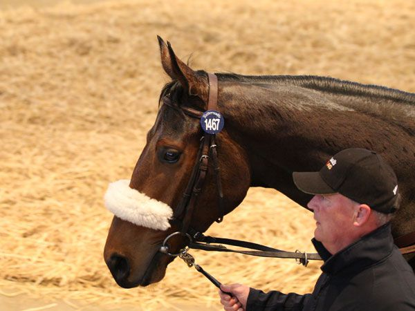Lot 1467: Obviously (IRE)
