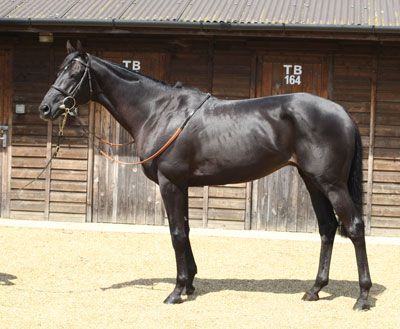 Lot 210: TOP SPIN