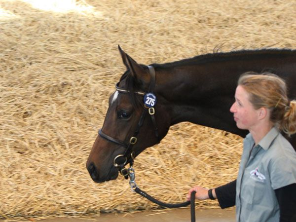 Galileo (IRE) / Peace Time (GER)