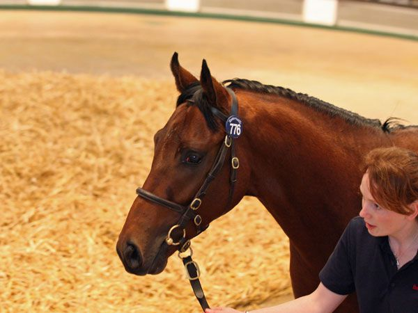 Lot 776: Exceed And Excel (AUS) / Merle (GB)