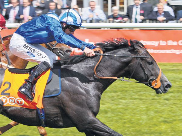 G2 July Stakes winner Alhebayeb, whose dam Miss Indigo was purchased at February for 6,500 gns