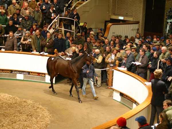 A packed sale ring at the Tattersalls December Sale