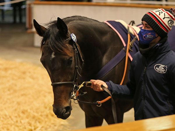 Record-breaking sale topper English King