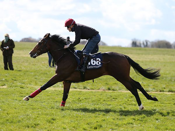 Reversion breezing at the Tattersalls Craven Breeze Up Sale