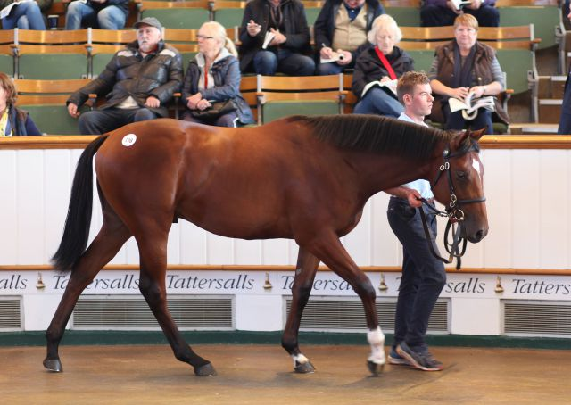 La Barrosa at the Tattersalls October Yearling Sale
