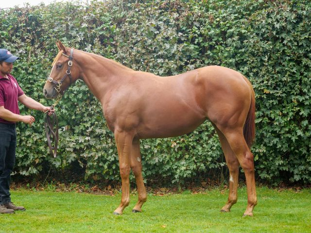 Get Ahead at Book 1 of the Tattersalls October Yearling Sale