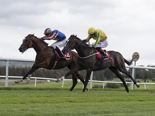 Royal Dornoch Winning at Gowran Park