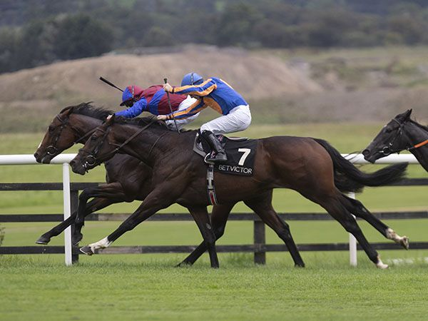 River Thames winning on debut at Punchestown