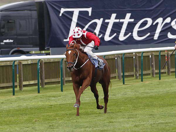 55,000 guineas December Foal Sale purchase Saffron Beach winning the Group 1 Sun Chariot Stakes