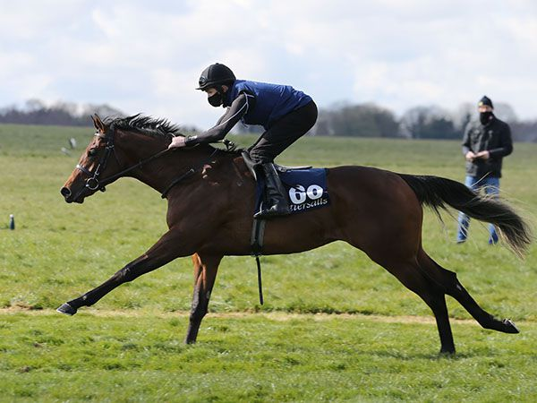 Tuscan Breezing at the Tattersalls Craven Breeze Up Sale