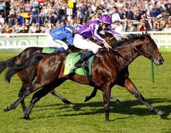 SEEKING SOLACE, dam of G1 July Cup winner TEN SOVEREIGNS (pictured) was purchased at the July Sale for 65,000 guineas